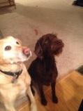 Mabel and Kimber